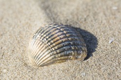 shell-1274305_640